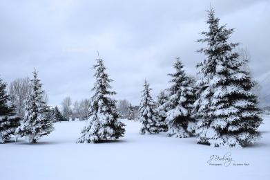 Coniston - Ontario