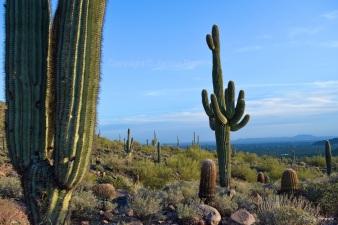 Usery Mountain Regional Park - Arizona