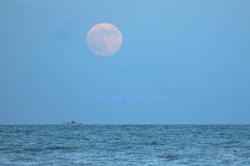 Harvest Moon - Cocoa Beach - Florida