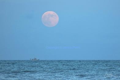 Harvest Moon - Cocoa Beach - Florida